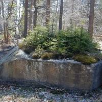 Granit-Findling mit Fichtenwäldchen