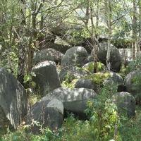 Granit-Findlinge bemoost
