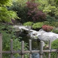 Japanischer Garten mit Koiteich