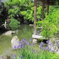 Japanischer Garten Nürnberg, Japangarten