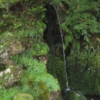 Japangarten Ginkaku 3