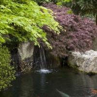 Wasserfall in den Koiteich