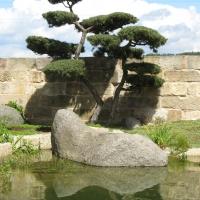 Japanischer Garten mit Großbonsai