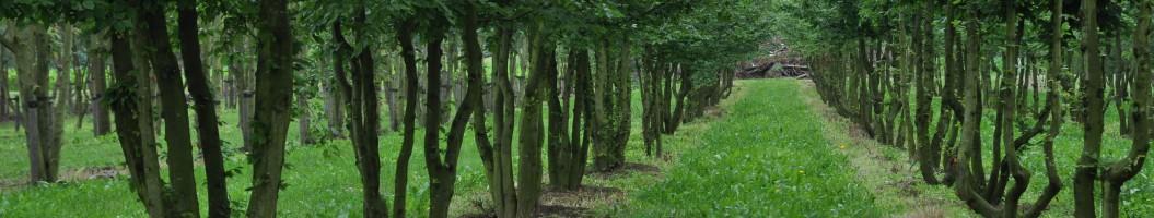 Baumschule für Garten-Designer