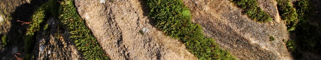 Moos auf Marmorfelsen im Japangarten Naturform