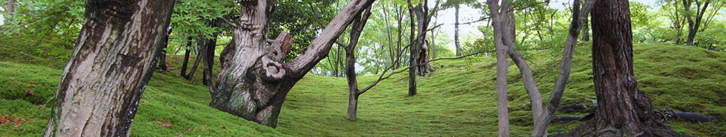 Japanischer Garten mit Moosflächen Imperial Palast Garten Kyoto