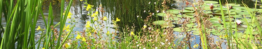 Teichrand im Japangarten